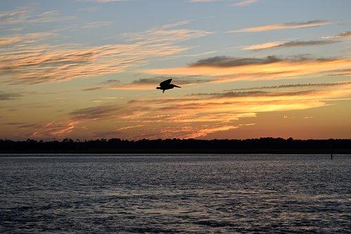 Pelican, Flying, Bird, Avian, Nature, Wildlife, Wild