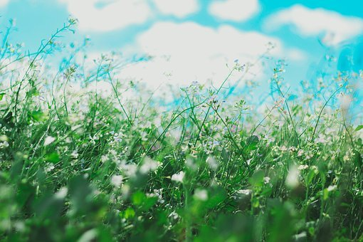 Flowers, Nature, Blossoms, Field, Bed, White, Purple