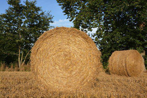 Straw, Roumballer Straw, Pre, Nature, Field