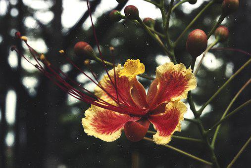 Flowers, Nature, Blossoms, Trees, Fruits, Stems, Stalk