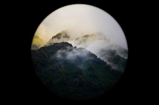 Nature, Forests, Trees, Fog, Light, Leaks, Vignette