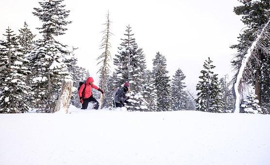 Nature, Landscape, Forests, Trees, Blanket, Snow, Fog