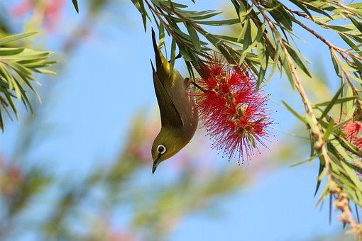 Animals, Birds, Beautiful, Gorgeous, Feathers, Beak