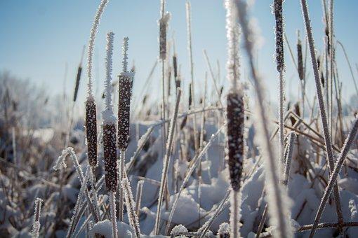 Nature, Grass, Field, Stems, Stalks, Sway, Wind