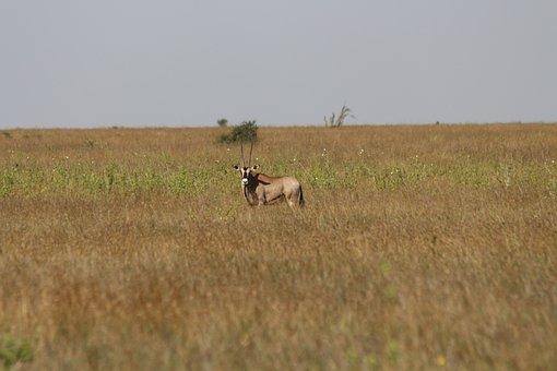 Oriz, Laikipia, Kenya