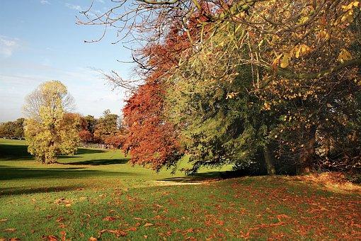 Nature, Grass, Manicured, Lawn, Trees, Park, Fallen