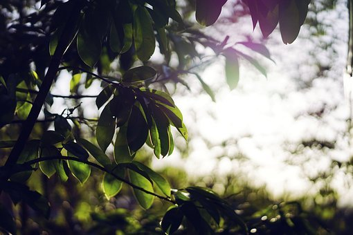 Nature, Plants, Trees, Branches, Leaves, Light, Leaks