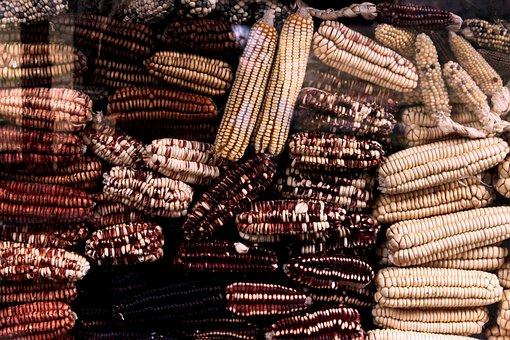 Corn, Grain, Field, Farm, Market, Sweet