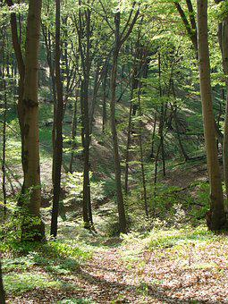 Gorge, Dolinka, Forest, Valley, Cliff, Nature