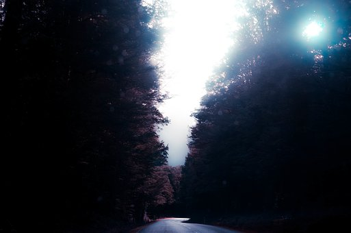 Nature, Road, Paths, Streets, Forests, Sky, Clouds, Fog