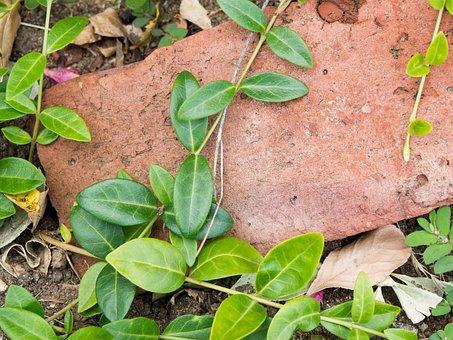 Nature, Leaves, Vines, Creep, Ground, Soil, Rocks