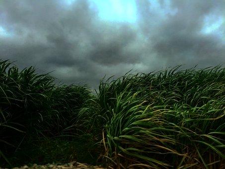 Nature, Grass, Buffalo, Sway, Wind, Sky, Clouds, Still