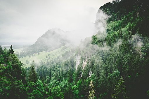 Nature, Forests, Trees, Slope, Fog, Green