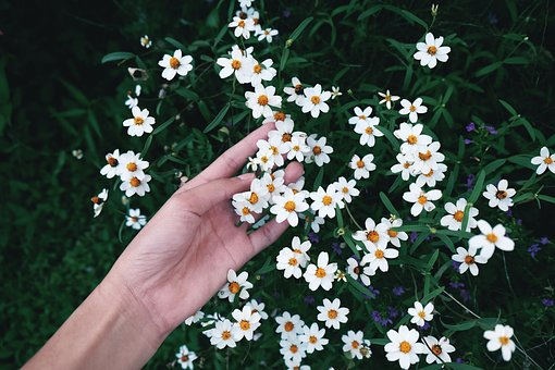 Flowers, Nature, Blossoms, Branches, Stems, Stalk