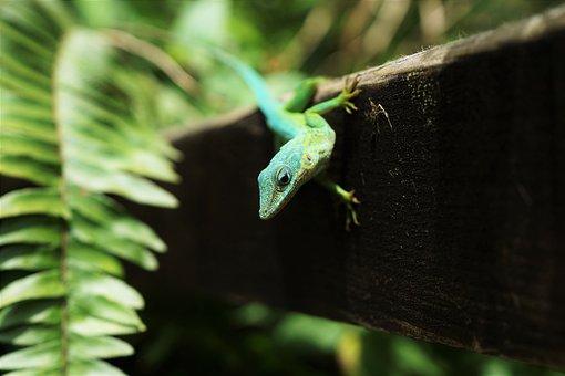 Animals, Reptiles, Lizard, Gecko, Tree, Bark, Wood