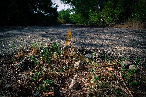 Road, Stop, Overgrown, Abandoned, Street, Broken