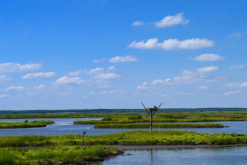 Marshland, Estuary, Water, Grass, Birds, Sunny, Nature