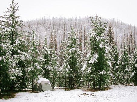 Nature, Landscape, Forests, Trees, Snow, Blanket, Camp