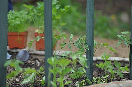 Gardening, Garden, Spring, Plant, Outdoors, Soil, Grow