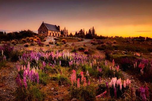 New Zealand, House, Home, Cottage, Landscape, Flowers
