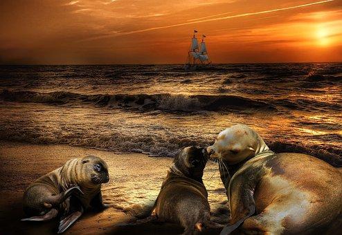 Emotions, Nature, Animals, Love, Beach, Sea, Ocean