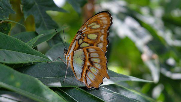 Butterfly, Sanctuary, Nicaragua