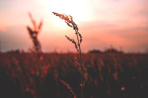 Nature, Plains, Grass, Wild, Flowers, Field, Sky