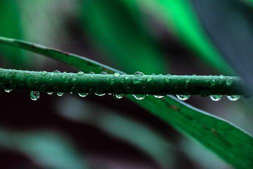 Nature, Plants, Leaves, Veins, Water, Droplets, Rain