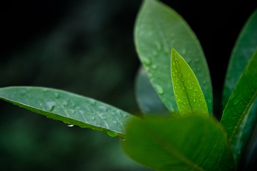Nature, Plants, Leaves, Veins, Rain, Water, Droplets