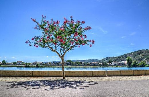 Tree, Boulevard, Road, Travel, Green, Park, Tourism
