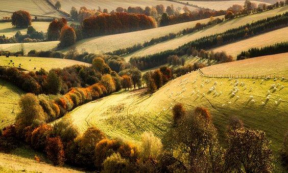 Landscape, Fall, Autumn, Woods, Trees, Foliage, Field