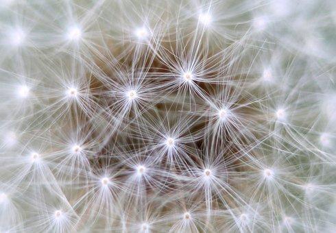 Dandelion, Background, Link, Neurons, Communication