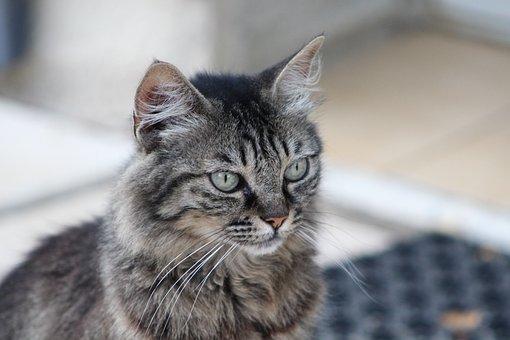 Cat, Animal, Animals, Cat's Eye, Feline