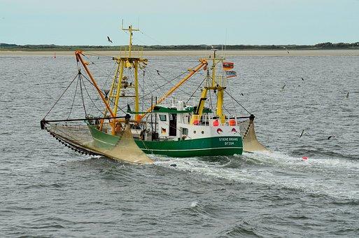 Borkum, Fishing Boat, Fishing, Fishing Vessel, Fischer