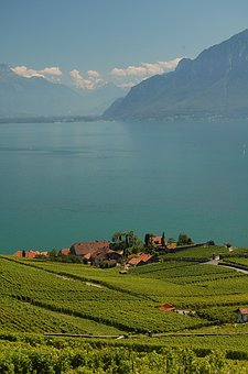 Lavaux, Vaud, Vineyards, Geneva, Lake, Lac, Leman