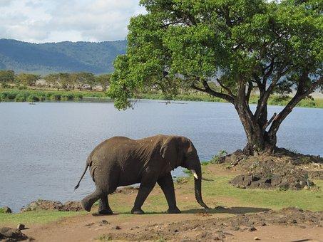 Holiday, Escape, Africa, Tanzania, Colors, Mats