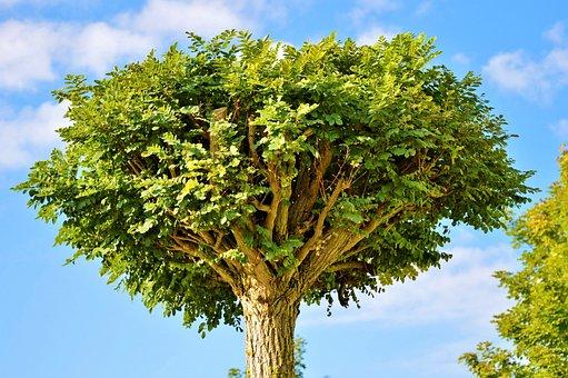 Tree, Crown, Treetop, Leaves, Aesthetic, Nature