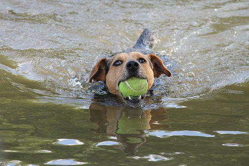 Dog, Swim, Play, Ball, Floating, Pet, Sport