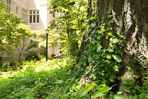 University, Campus, Tree, Growth, Green, Plant, Vine