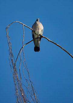 Dove, Bird, Nature, Wing, Feather, Pigeon, Animal, Fly