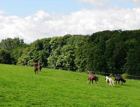 Horses, Horse Meadow, Gallop, Wild Horses, Coupling