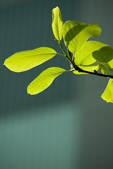 Bud, Leaf, Green, Spring, Plants, Nature, Greenery