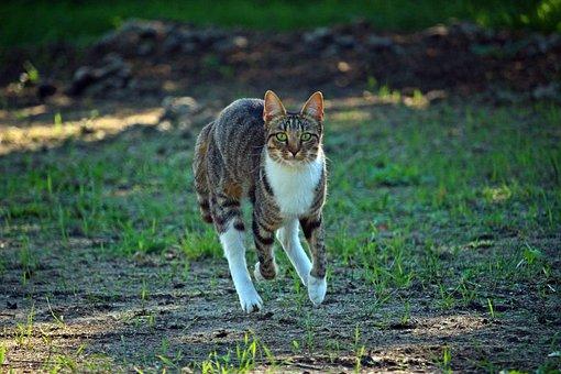 Mieze, Cat, Mackerel, Tiger Cat, Kitten, Domestic Cat