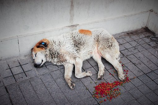 Street Dog, Animal, Dog, Street, Lonely, Outdoor, Sad