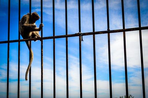 Monkey, Streetsofindia, Streetphotography, India