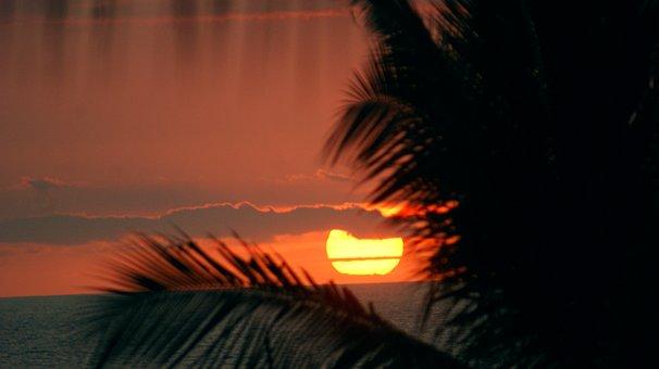 Sunset, Life, Hawaii, Palm Trees, Summer, People