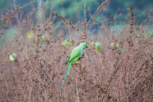 Parrot, Green, Bird, Nature, Pet, Wildlife, Feather