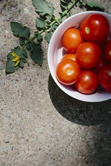 Tomato, Vegetables, Summer Vegetable, Harvest, Red