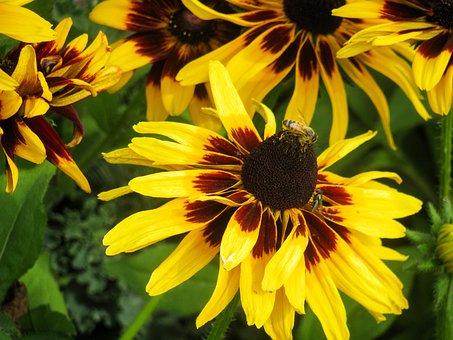 Yellow, Flowers, Bumble Bee, Bees, Garden