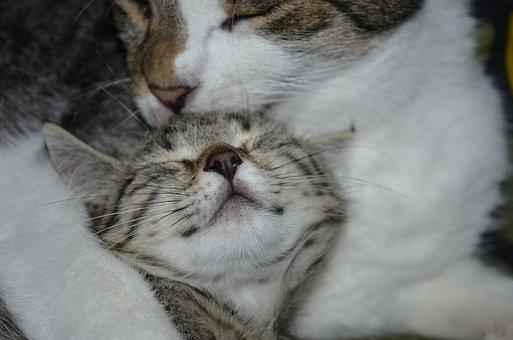 Friends, Cat, Clean, Small And Large, Motherly Love